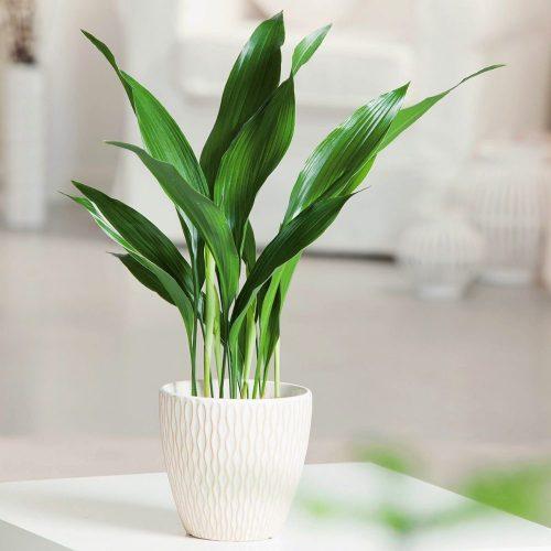 فروش گل و گیاهان آپارتمانی