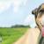 حقایقی جالب در مورد سگ ها