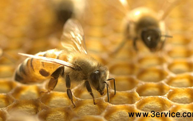 زنبورداری هوشمند و دیجیتال
